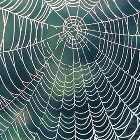 درس من العنكبوت - الحكمة في الهندسة المعمارية